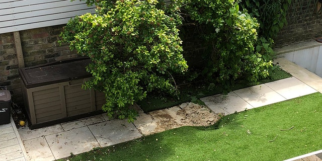 The force of the body falling from a commercial airplane dented paving slabs and astro-turf in a back yard in Clapham, South London. (SWNS)