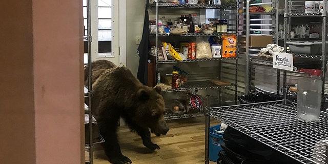 Westlake Legal Group alaska-bear-2-Highliner-Lodge Alaska bear put down after breaking into fishing lodge in search of dinner Stephen Sorace fox-news/us/us-regions/west/alaska fox-news/science/wild-nature/mammals fox-news/food-drink/food/restaurants fox news fnc/us fnc fa4231a6-17cd-55d1-95cc-64e965b0bb6a article