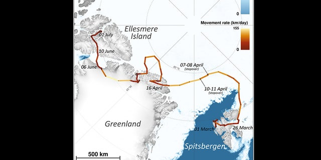 A map depicting the journey of the arctic fox.