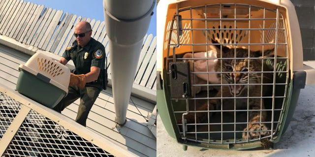 New Hampshire Fish and Game safely removed the animal.