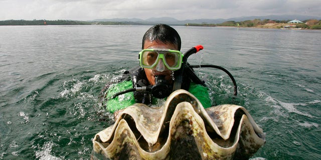 A diver holds a giant clam to launch a conservation and propagation program for endangered species in the waters of Puerto Princesa City, Palawan Province, southwestern Philippines, February 24, 2007. [Associated Press]