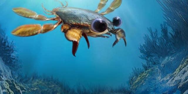Life reconstruction of Callichimaera perplexa: The strangest crab that has ever lived. Credit: Oksana Vernygora, University of Alberta