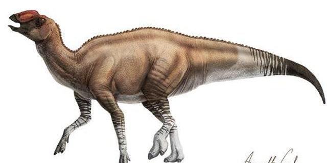 Aquilarhinus palimentus. (Credit: ICRA Art)