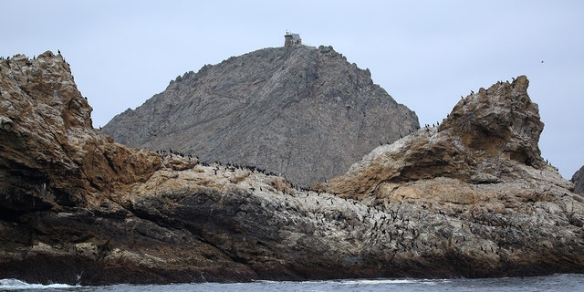 Crews might dump 1.5 tons of rodent poison on a Farallon Islands to stop an invasive residence mice class from wreaking massacre on a local ecosystem.