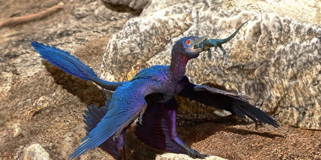 Illustration of the lizard-swallowing Microraptor. (Credit: DOYLE TRANKINA)