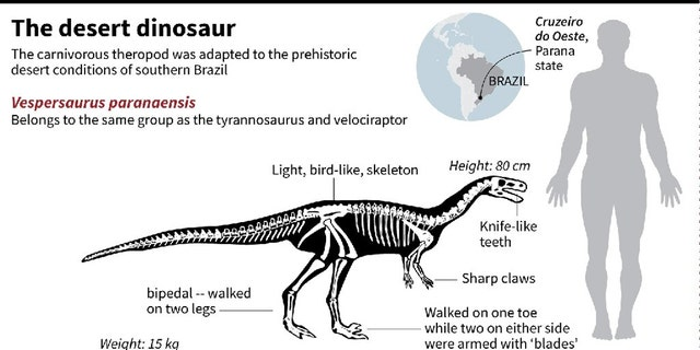 Factfile on a insatiable theropod dinosaur, blending to a antiquated dried conditions of southern Brazil 90 million years ago. (Credit: Phys.org)