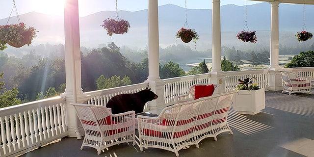 A black bear walks along a veranda at the Omni Mount Washington Resort just after sunrise at Mount Washington, N.H., on June 29. (AP/Omni Mount Washington Resort)