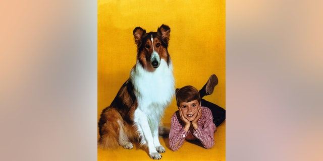 Jon Provost said he quickly connected with Lassie.