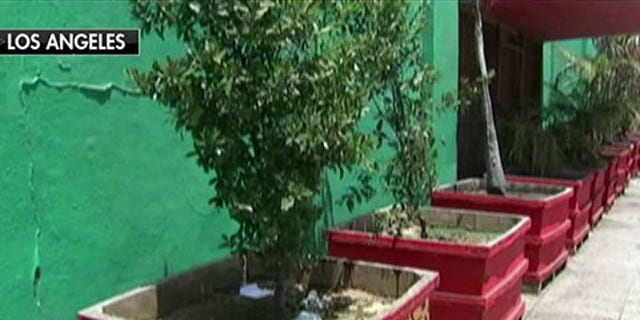 A Los Angeles business placed 140 planter boxes around their building in response to tents being set up by homeless people.