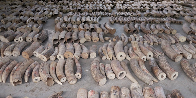 The 8.8 tons of elephant tusks were estimated to have been taken from nearly 300 African elephants.