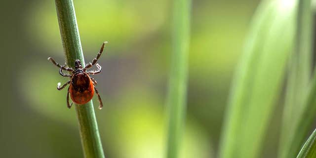 House lawmakers passed a bill last week that ordered to Pentagon to review whether it turned ticks into biological weapons.