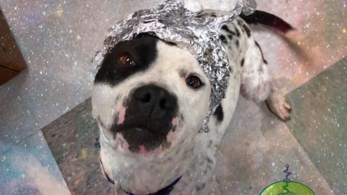 Oklahoma City animal shelter asks Area 51 raiders to 'come storm our shelter' instead, gets huge response