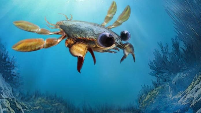Scientists discover bizarre 'nightmare' crab with cartoon eyes