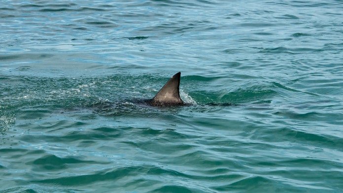 Fisherman's calm reaction while handling shark stuns onlookers: 'Separates the men from the boys!'