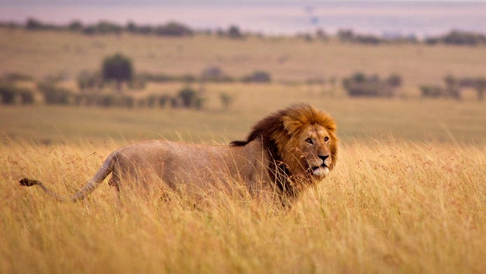 Girl claiming to be daughter of man caught kissing over dead lion responds: 'I don't consider you my dad an...