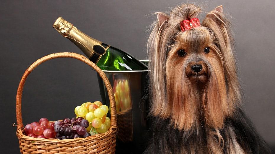 'Fox & Friends' celebrates National Dog Mom's Day