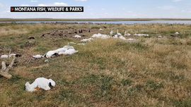 SEE IT: Thousands of birds killed during hailstorm at Montana wildlife preserve