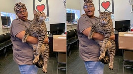 26-pound tabby cat goes viral on social media: 'I want to hug him'