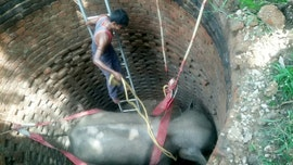 Incredible images show elephant getting rescued from a 20-foot well in India
