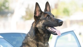 California police K-9 dies after being left alone in hot car