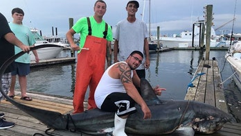 510-pound monster shark reeled in after 3-hour fight: 'Literally man versus beast'