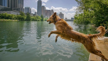 Beware the toxic algae that can kill your dog