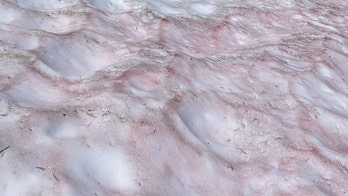 'Watermelon snow' found in Yosemite National Park at high elevation