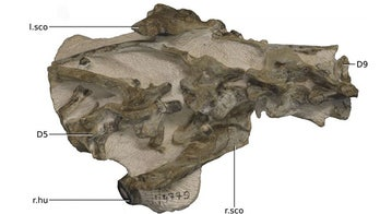 New dinosaur identified after 'hiding in plain sight'