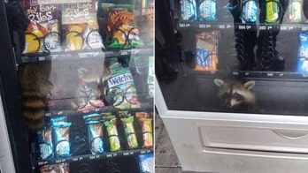 SEE THE VIDEO: Florida deputies rescue raccoon from vending machine