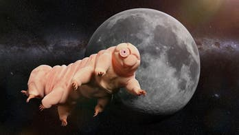 There are thousands of tardigrades on the Moon. Now what?