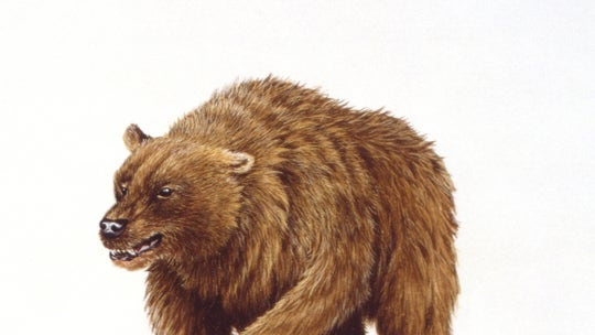 Humans played major role in driving cave bear to extinction, study says