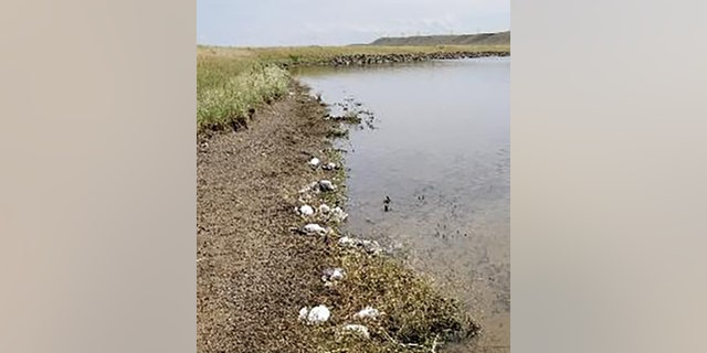 Large hail was blamed for killing thousands of birds in Montana.