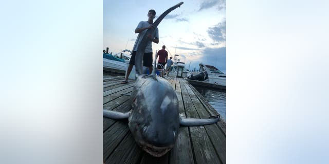 "Friends Joseph Egitto, Pat Salvato and Frank Pomponio made the ""catch of a lifetime"" when they reeled in a 510-pound Thresher shark measuring nearly 8 feet long off the coast of New Jersey on Sunday."