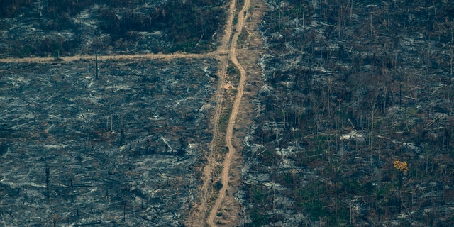 A scorched area of the Amazon rainforest is seen in Altamira, Para state, Brazil, Wednesday, Aug. 28, 2019.