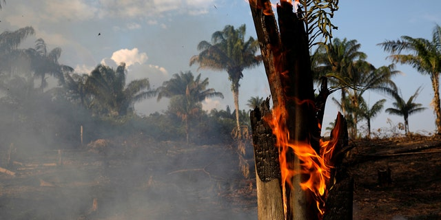 A tract of Amazon jungle is seen burning as it is being cleared by loggers and farmers in Iranduba, Amazonas state, Brazil August 20, 2019.