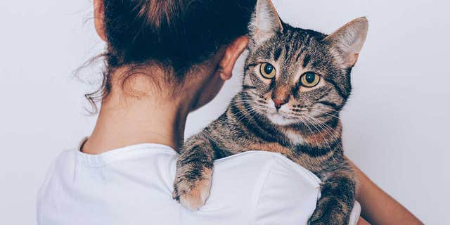 """We found no differences between cat owners and the other participants on any of the self-report measures of anxiety, depression or experiences in relationships,"" the study explains."