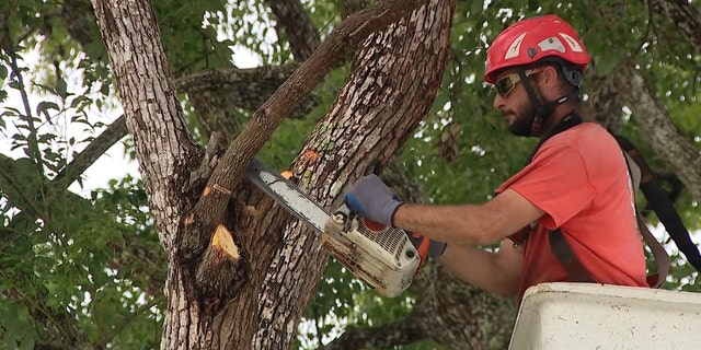 Tree trimmers in Brevard County, Florida are busy ahead of Dorian's potential arrival.
