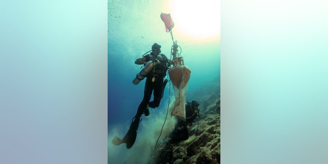 A diver brings an amphora up from one of the wreck sites.