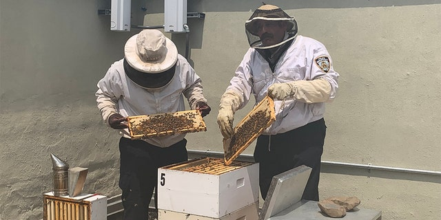 Officer Mays, left, and Officer Lauriano, right, told Fox News they both enjoyed beekeeping as a hobby before doing it professionally for the NYPD.