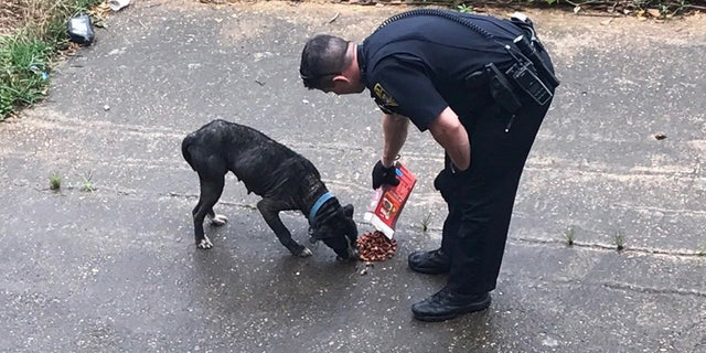 Sean Tuder is pictured here feeding an emaciated dog with food he purchased, while waiting for animal control to arrive.