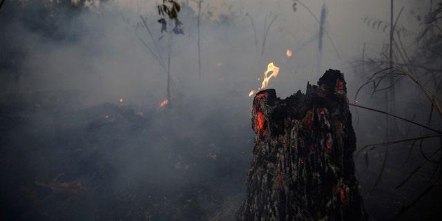 Westlake Legal Group amazon-rainforest-fire Satellite imagery of Amazon rainforest fire shows massive carbon monoxide pollution plume fox-news/science/planet-earth/pollution fox-news/science/planet-earth/natural-disasters fox news fnc/science fnc e158924f-6a53-5c44-8620-b91e80d0e907 Chris Ciaccia article