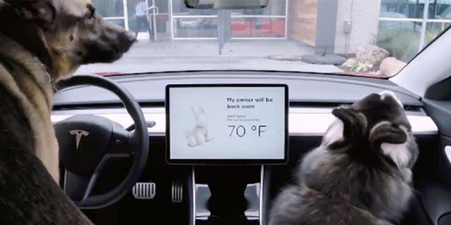 Telsa's Dog Mode Hasn't Been A Good Boy