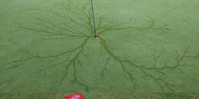 Aftermatch of a lightning strike at the 7th hole at Eagle Creek Golf Club in Moyock, N.C.