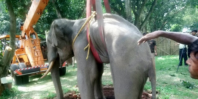 Rescuers used a crane to lift the elephant from the well. (Credit: SWNS)
