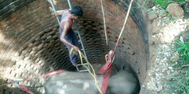 Footage has captured how a huge rescue operation was launched to save an elephant stranded at the bottom of a well in an Indian jungle. The clip shows rescuers use a crane to hoist the huge animal out of the well and onto the back of a truck ready for release back into the wild. (Credit: SWNS)