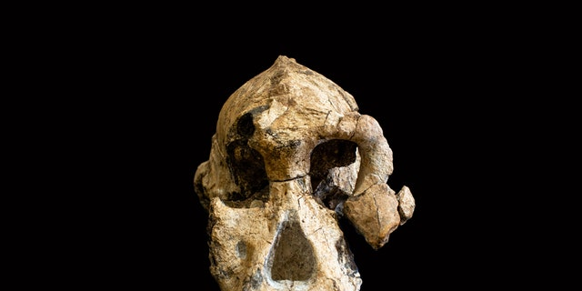 Ancient skull discovery could rewrite history!