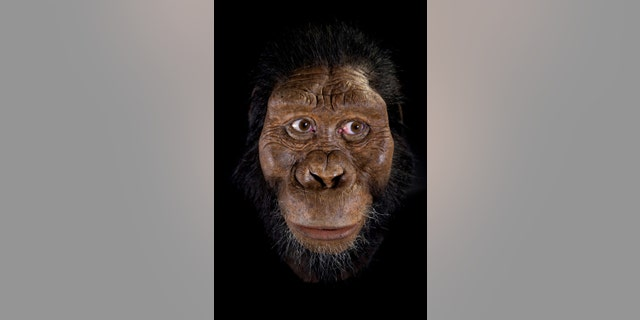 Facial reconstruction by John Gurche made possible through generous contribution by Susan and George Klein. (Credit:Matt Crow, courtesy of the Cleveland Museum of Natural History)