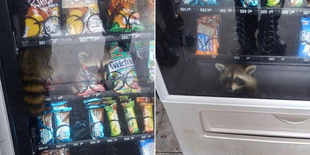 The Volusia County Sheriff's Office posted on Facebook about the critter in the vending machine.