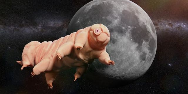 Dehydrated tardigrades that crash-landed on the moon in April won't come back to life anytime soon.(Credit: Shutterstock)