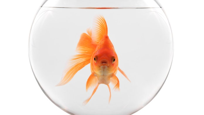 Restaurant provides solo diner with goldfish companion: 'So nice and thoughtful'